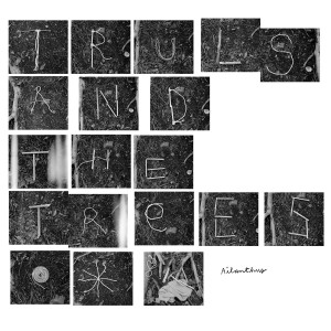 Truls and the Trees - Ailanthus