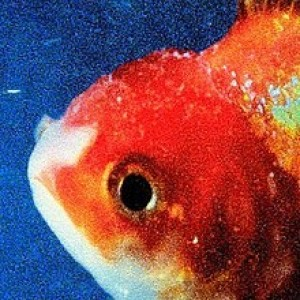 Vince Staples - Big Fish Theory
